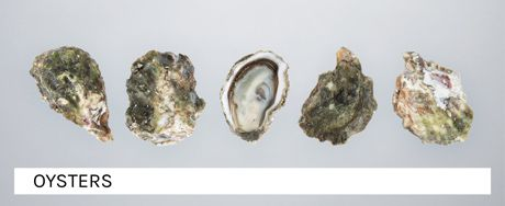 The banner of the shellfish category